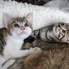 可愛い子猫もらって下さい。 サムネイル2