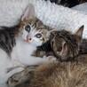 可愛い子猫もらって下さい。 サムネイル3