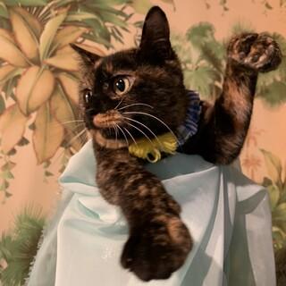 1歳弱♀5匹子猫の母サビ猫