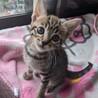 可愛い子猫もらって下さい。 サムネイル4