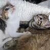 可愛い子猫もらって下さい。 サムネイル5