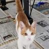 【相模大野駅前北口デッキ】♪猫の譲渡会♪