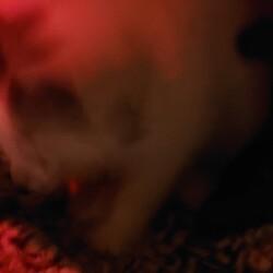 「里親4日目と猫草とこたつ」サムネイル3