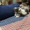 子猫の里親募集 サムネイル4