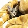 【まん丸おめめ】キジトラ子猫のととくん サムネイル2