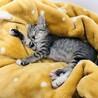 【まん丸おめめ】キジトラ子猫のととくん サムネイル6