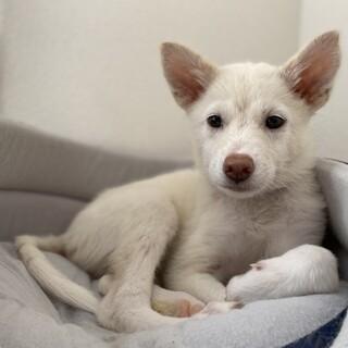 山口県周南市センターから可愛い子犬
