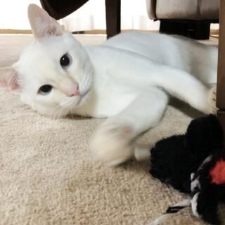 今週土曜迄に家族を見つけてあげたい♡白猫君