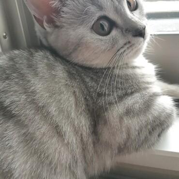 窓際の見返り美猫
