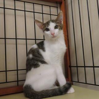 猫が大好き、温厚なじんくん、留守番可・医療済