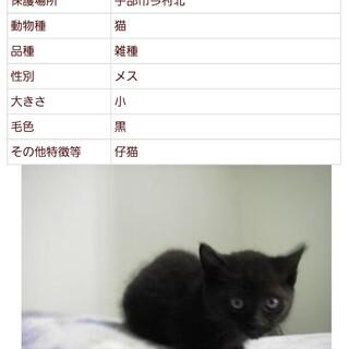 処分間近 可愛い黒猫の女の子
