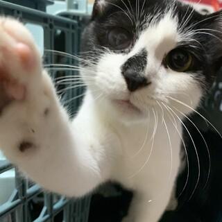 線路の上にいたので保護した子猫くん