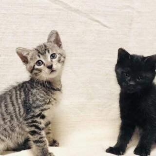 コロンコロンな子猫達!!