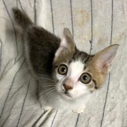 三重県津市10月25日(日)子猫の譲渡会