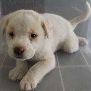 里親様を待っています。子犬♀177