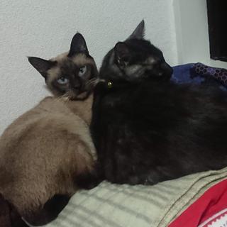 人間大好きおチビさん・大人猫さんに新しいおうちを!