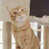 1歳美猫☆元野良で人慣れ頑張ってます!兄弟猫