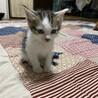 子猫の里親募集 サムネイル6
