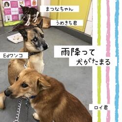 「倉敷の「雨降って犬が溜まる」」サムネイル3
