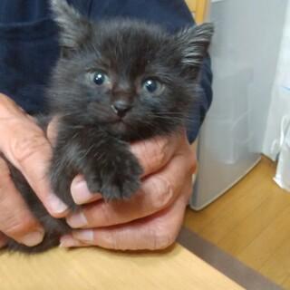 青い目の元気な仔猫