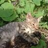 生後3ヶ月のキジ猫オス
