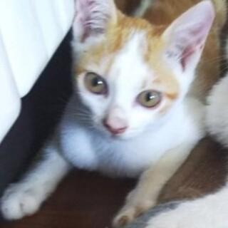 好奇心旺盛なチビにゃん、茶白の仔猫!