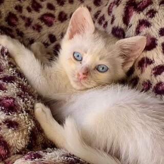 icat-M988 綺麗なブルーアイ♪
