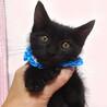 なれなれ甘えた♪黒子猫★ピノくん 2ヵ月弱