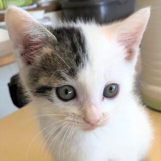 路上で身を寄せ合っていた子猫4兄弟 カコちゃん