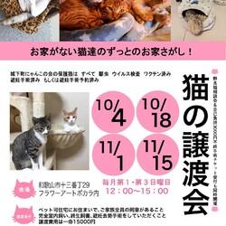 城下町にゃんこの会 保護猫たちの譲渡会