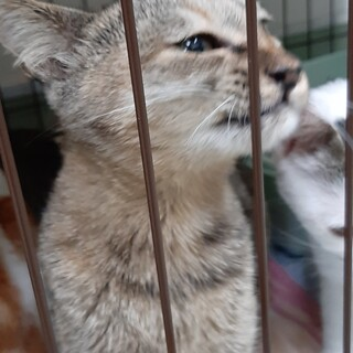 とっても人懐っこいサビ猫ちゃん!