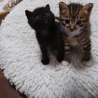 生後2ヶ月の可愛い子猫たち