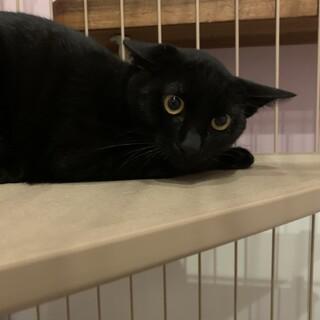 黒猫のでんすけくん