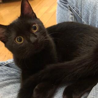 甘えん坊の黒猫キキちゃん
