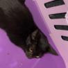 野良猫しゅっとしたイケメン黒猫くん