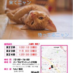 Sakai♥猫活
