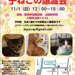 【野崎参道商店街】臨時 子猫の里親会