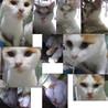 生後6か月位のメス子猫と母猫(姉妹?)避妊手術済 サムネイル4