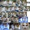 生後6か月位のメス子猫と母猫(姉妹?)避妊手術済 サムネイル5