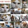 生後6か月位のメス子猫と母猫(姉妹?)避妊手術済 サムネイル6