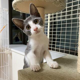 【明日10/25譲渡会】車から遺棄された子猫