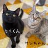 【明日10/25譲渡会】甘えた子猫 サムネイル3