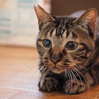 コミュニケーション取り放題!楽しい猫さん