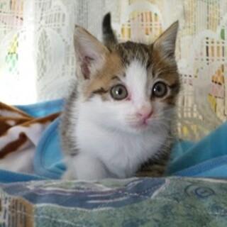 めちゃくちゃ可愛い人が大好きな赤ちゃん猫!