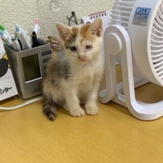 推定1ヶ月の三毛猫ちゃん