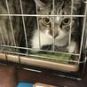 猫の里親探し ミュウの会 相模原