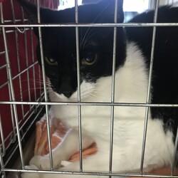猫の里親探し ミュウの会 相模原 サムネイル2