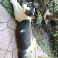 猫の里親探し ミュウの会 相模原 サムネイル3