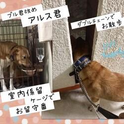 「倉敷っ子ブル君改めアルス君と福田犬」サムネイル2