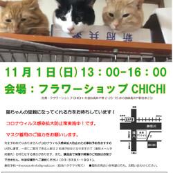 猫の譲渡会 in 高井戸